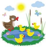 Pond with ducks. Stock Photos