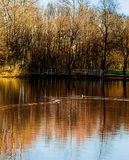 Pond and ducks Stock Photography