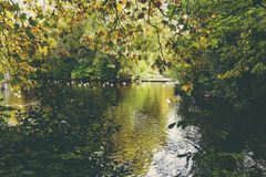 Pond with ducks and yellow leaves of tree branches, autumn at th. Pond with ducks and yellow leaves of tree branches, detail of autumn-coloured city park in Royalty Free Stock Images