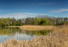 Pond in early spring in April Royalty Free Stock Photo
