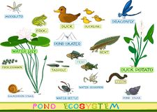 At the pond. Ecosystem of pond with inhabitants Stock Image