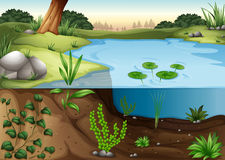 A pond ecosytem stock illustration