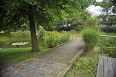 Pond em um parque da cidade com um lírio Fotos de Stock Royalty Free