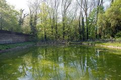 Pond enclosed in a forest Stock Image