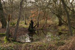 Pond in Epping forest Royalty Free Stock Photography