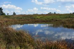 Pond in the fagnes Stock Image