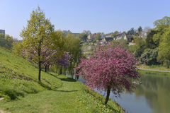 Pond at Falaise in France. Pond and prunus tree blossom at Falaise, a commune in the Calvados department in the Basse-Normandie region in northwestern France royalty free stock photo