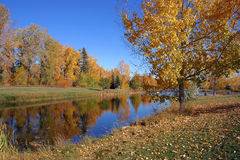 Pond in Fall. A pond in Autumn Royalty Free Stock Photos