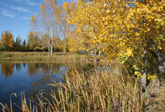 Pond in Fall 3. A pond surrounded by autumn colors Stock Image