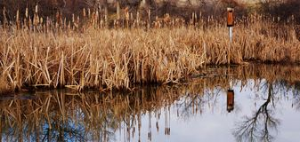 A pond in the fall with a bird house. Stock Images