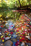 Pond with fall color Stock Images