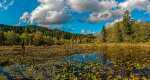 Pond On A Fall Day. Beaver Pond and Sky in Autumn Stock Images