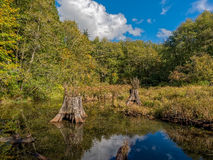Pond On A Fall Day. Beaver Pond and Sky in Autumn Stock Photo