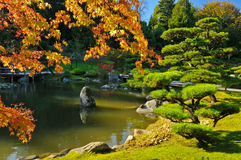 Pond and Fall Foliage in Japanese Garden Royalty Free Stock Photography