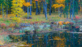 Pond in fall forest Royalty Free Stock Images
