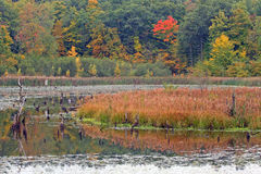 Pond in Fall upstate NY Royalty Free Stock Photography