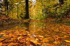 Pond with fallen leaves in a forest after autumn rain at mountain Goc Stock Images