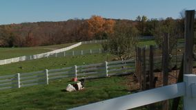Pond Farm (2 of 9). A view or scene on the farm stock video footage