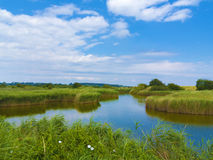 Pond in the fen Royalty Free Stock Photo