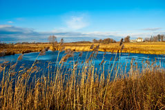 Pond in a field Royalty Free Stock Images