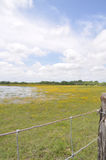 Pond in a field with fence. Large pond floods a field, with yellow flowers and mesquite trees. Fence in foreground. Taken in South Texas Stock Photography