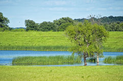 Pond & Field. This rural scene features a quiet pond with bright green grasses and tiny birds in the trees Stock Photo