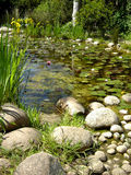 Pond filled with water lillies. Small pond filled with water lillies royalty free stock photo