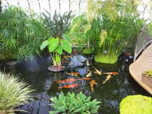 Pond and fish Stock Images