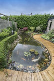 Pond with fish. Big pond with koi carps and plants Royalty Free Stock Photo
