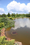 Pond with fish and blue sky landscape Stock Photography