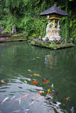 Pond and fish in a temple in Bali. This is a view of a beautiful pond in a temple in Bali stock photography
