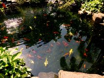 Pond with Fishes Royalty Free Stock Photo