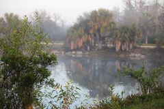 Pond in Florida. Foggy morning pond scene with palms reflecting in water Royalty Free Stock Image