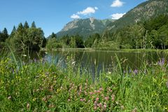 Pond with flowers and blossoms in summer of Oberstdorf Bavaria Royalty Free Stock Photo