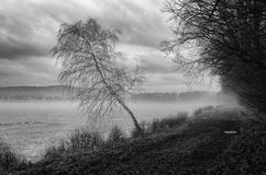 Pond in fog royalty free stock photo
