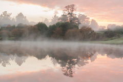 Pond foggy morning Royalty Free Stock Photography