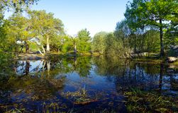 Pond in Fontainebleau forest stock photography
