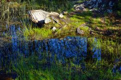 Pond in Fontainebleau forest Stock Images