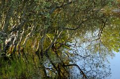 Pond in Fontainebleau forest stock photos