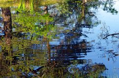 Pond in Fontainebleau forest Royalty Free Stock Photography