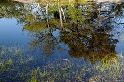 Pond in Fontainebleau forest stock image