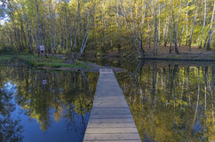Pond with foot bridge. Reflection of trees in water. Royalty Free Stock Photos