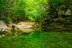 Pond in forest. A secluded pond in a forest on a summer day Stock Photos
