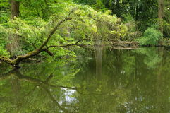 Pond in Forest Royalty Free Stock Image