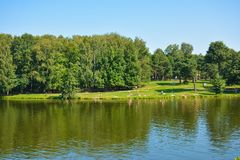 Pond. In forest Stock Image