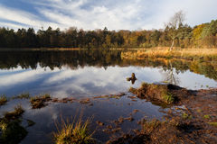 Pond and forest in autumn Royalty Free Stock Image