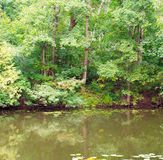 Pond in the forest. background, nature. Royalty Free Stock Photo