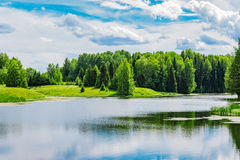 Pond and forest Royalty Free Stock Image