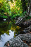 Pond in the forest landscape Stock Photos