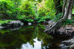 Pond in the forest landscape Royalty Free Stock Images